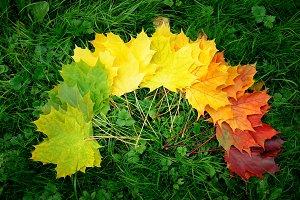Autumn leafs colorful rainbow color