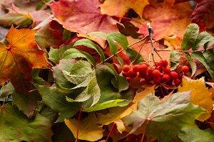 Background of autumn leaves. Autumn