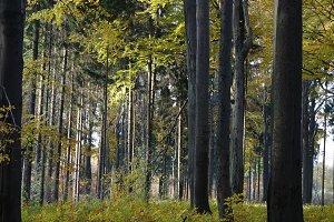 Autumn forest 02