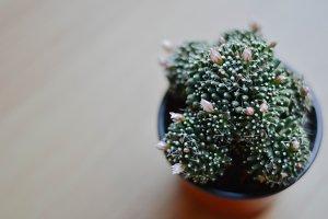 Cactus Galaxy