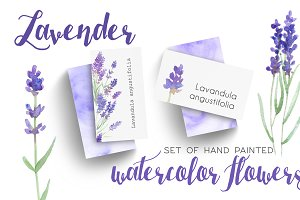 Lavender Watercolor Flowers