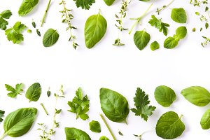 Green fresh aromatic herbs