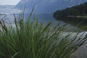 Grass at Bohinj Lake