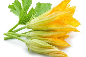 Zucchini flowers on a white backgrou