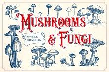 Vintage Mushrooms & Fungi