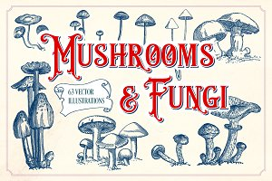 Vintage Mushrooms & Fungi