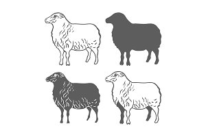 Domestic Animal Sheep Design Element