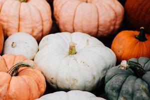 Fall Pumpkin Patch Halloween Photo