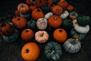 Fall Pumpkin Patch Dark & Moody