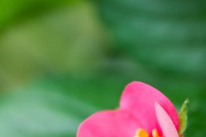 Strawberry Pink Flower #3