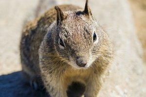 Squirrel #20