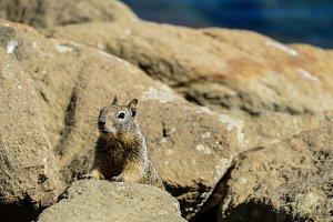 Squirrel #18