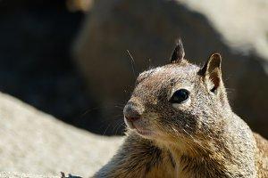 Squirrel #19