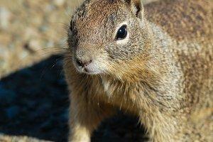 Squirrel #17