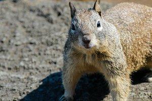 Squirrel #16