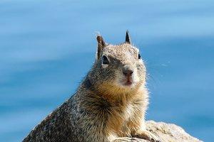 Squirrel #15