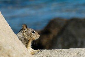 Squirrel #13