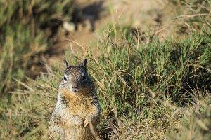 Squirrel #9