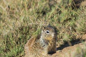 Squirrel #7