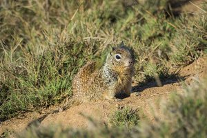 Squirrel #5