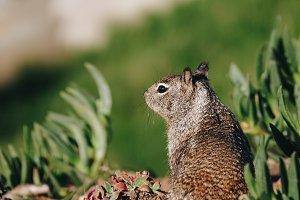Squirrel #4