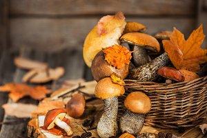 Autumnal wild forest edible mushroom