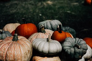 Fall Pumpkins, Farmers Market