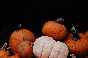 Fall Pumpkins Orange & Black