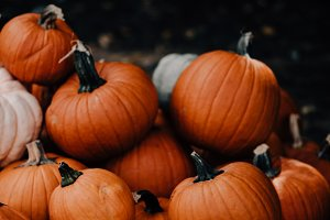 Fall Pumpkins Black & Orange
