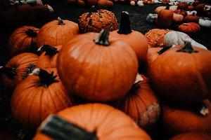 Fall Pumpkin Patch, Farmers Market