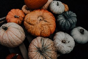 Fall Pumpkins Food Photography