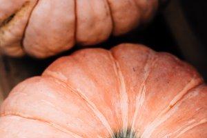 Fall Pumpkins Close Up