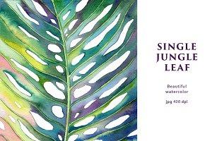 Single Jungle Leaf