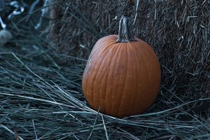 Fall pumpkin sitting in hay & straw
