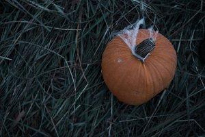 Fall Pumpkin in Halloween Hay