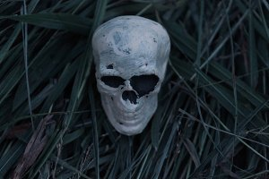 Scary Skeleton Skull in Grass
