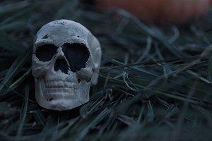 Scary Skeleton Skull in Grass, Fall