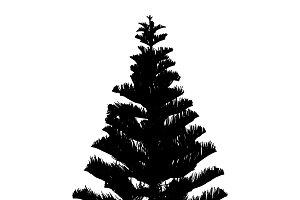 Pine tree silhouette on white