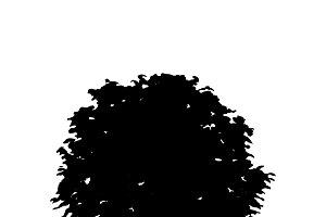 Boxwood silhouette on white