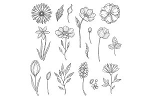 Hand drawn flowers. Vector various