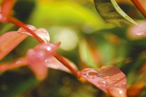 Macro of raindrops on leaves
