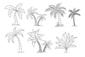Palm trees coloring book. Beautiful