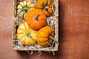 Different Colorful Pumpkins, Autumn