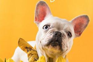 french bulldog dog and beautiful yel