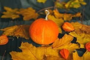 Autumn still-life. One orange pumpki