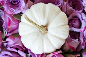 White pumpkin and purple flowers