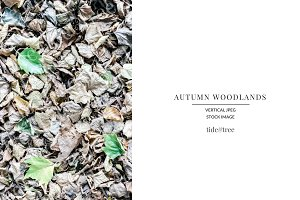 Autumn Woodlands | Vertical No 8
