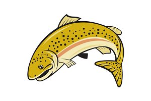 Rainbow Trout Jumping Cartoon Isolat