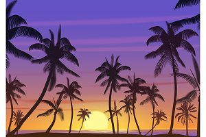Palm coconut trees sunset landscape