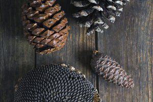 pinecones and sunflower
